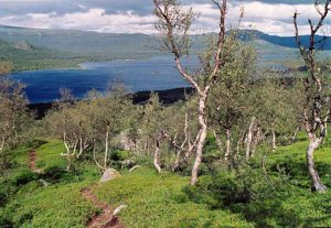 A view of Lake Langas, part of Stora Lulevatten, seen thought the birch forest from above Saltoluokta tourist station