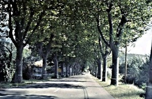 A typical road in le Midi, lined with platanes, planetrees