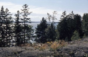The Baltic Sea viewed form the island where we had our lunch.