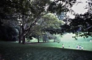 A dreamy corner of Central Park close to Fifth Avenue