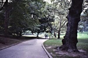 A corner of midtown Central Park